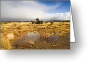 Puddle Photo Greeting Cards - Tasmanian Storm  Greeting Card by Mike  Dawson