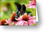 Echinacea Greeting Cards - Tasty Greeting Card by Lois Bryan