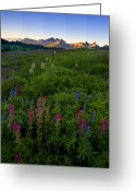 Paintbrush Photo Greeting Cards - Tatoosh Dawn Greeting Card by Mike  Dawson