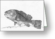Saltwater Fish Greeting Cards - Tautog Greeting Card by Kathleen Kelly Thompson