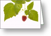 Leaves Photo Greeting Cards - Tayberry Greeting Card by Andy Smy