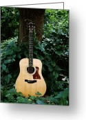 String Instrument Greeting Cards - Taylor Greeting Card by Tim Nichols
