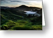 Cameron Greeting Cards - Tea Plantation at Dawn Greeting Card by David Bowman