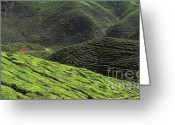 Cameron Greeting Cards - Tea Plantation in Malaysia Greeting Card by Charline Xia