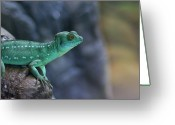 Lizard Greeting Cards - Teal Lizard Greeting Card by Photography by Zack Podratz