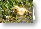 Tearful Greeting Cards - Tearful Duckling Greeting Card by Teresa Blanton