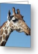 Tearful Greeting Cards - Tearful Giraffe Greeting Card by Renu Anne