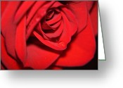 Tearful Greeting Cards - Tearful Rose 2 Greeting Card by Teresa Blanton