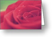 Rose Petals Greeting Cards - Tears of Love Greeting Card by Laurie Search