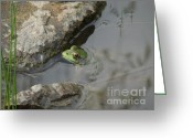 Linda Seacord Greeting Cards - Ted the Toad Greeting Card by Linda Seacord