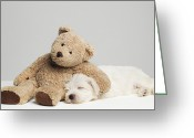 West Highland White Terrier Greeting Cards - Teddy Bear Resting On Sleeping West Highland Terrier Puppy, Studio Shot Greeting Card by Roger Wright