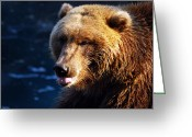 Wildlife Photos Greeting Cards - Teddy Not Greeting Card by Skip Willits