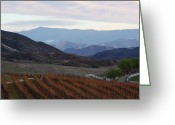 Wine Cellars Greeting Cards - Temecula vineyards Greeting Card by Viktor Savchenko