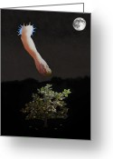 Ellenisworkshop Greeting Cards - Temptation Forbidden Fruit Greeting Card by Eric Kempson