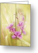 Grasses Greeting Cards - Tendresse Greeting Card by Priska Wettstein