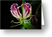 Fine Art Flower Photography Greeting Cards - Tendrils of My Mind Greeting Card by Christi Kraft