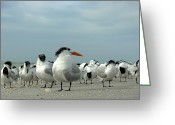 Seabirds Greeting Cards - Tern This Way Greeting Card by Debara Splendorio