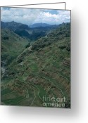 Terraces Greeting Cards - Terraces Of Rice Greeting Card by Photo Researchers