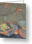 Amphibians Pastels Greeting Cards - Terrapene Greeting Card by Cindy Morawski