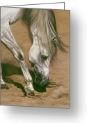 Horses Pastels Greeting Cards - Territory Greeting Card by Kim McElroy