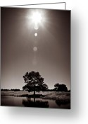 Texan Greeting Cards - Texan Sun Greeting Card by David Bowman