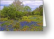 Blue Bonnets Greeting Cards - Texas  Blue Bonnet Painting Greeting Card by Linda Phelps