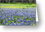 Texas Bluebonnet Greeting Cards - Texas Blues Greeting Card by Bill Morgenstern