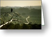 Telephoto Greeting Cards - Texas Hawk Greeting Card by Jerry McElroy