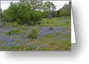 Blue Bonnets Greeting Cards - Texas Hill Country Blue Bonnets Greeting Card by Linda Phelps