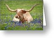 Texas Bluebonnet Greeting Cards - Texas Longhorn in Bluebonnets Greeting Card by Jon Holiday