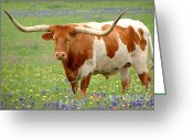 Texas Bluebonnet Greeting Cards - Texas Longhorn Standing in Bluebonnets Greeting Card by Jon Holiday