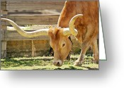 Bull Greeting Cards - Texas Longhorns - A genetic gold mine Greeting Card by Christine Till