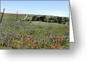 Texas.photo Photo Greeting Cards - Texas Roadside Wildflowers Greeting Card by Maris Salmins