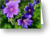 Original Equine Portrait Photo Greeting Cards - Texas Violet Greeting Card by David Ackerson