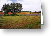 Tamyra Ayles Greeting Cards - Texas Wildflowers Greeting Card by Tamyra Ayles