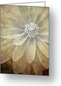 Black And White Flower Greeting Cards - Textured Dahlia Greeting Card by Meirion Matthias
