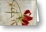 Red Orchid Blooms Greeting Cards - Textured Orchid Greeting Card by Bernard Jaubert