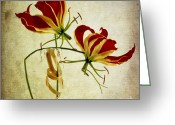 Whorl Greeting Cards - Textured orchids Greeting Card by Bernard Jaubert