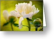 Bud Digital Art Greeting Cards - Textured Peony Greeting Card by Lois Bryan