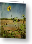 Photographs Digital Art Greeting Cards - Textured Sunflower Greeting Card by Melany Sarafis