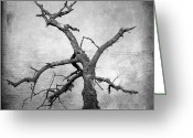 Black And White Photograph Greeting Cards - Textured tree Greeting Card by Bernard Jaubert
