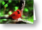 Red Birds Greeting Cards - Tha Cardinal Greeting Card by Bill Cannon