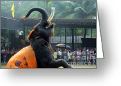 Reporting Greeting Cards - Thailand circus elefant Greeting Card by Yury Bashkin