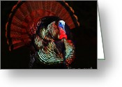 Thanksgiving Art Greeting Cards - Thanksgiving Turkey - Painterly - Square Greeting Card by Wingsdomain Art and Photography