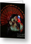 Thanksgiving Art Greeting Cards - Thanksgiving Turkey - Painterly Greeting Card by Wingsdomain Art and Photography