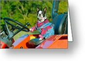 Overalls Greeting Cards - That is one Hard Workin Farm Dog Greeting Card by Grant Groberg