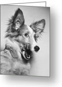 Shetland Sheepdog Greeting Cards - That Looks Good Greeting Card by M E Browning and Photo Researchers