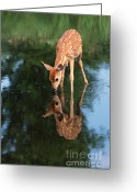 Deer Greeting Cards - That Must Be Me Greeting Card by Sandra Bronstein
