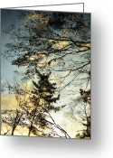 Reflected Tree Greeting Cards - Thaw Greeting Card by Dean Harte