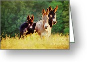 Vertebrate Greeting Cards - The A Family Greeting Card by Darren Fisher